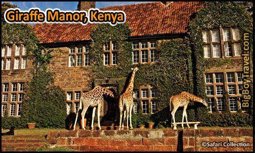 Coolest Hotels In The World, Top Ten, Giraffe Manor Kenya | Giraffe,  Giraffe manor hotel, Giraffe hotel