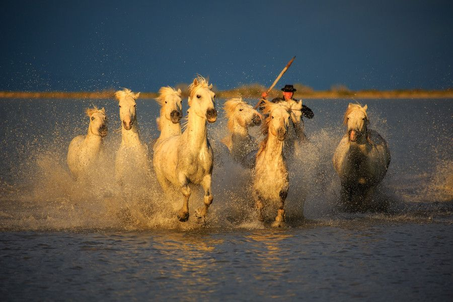 Photo The Camargue Horses by David Swindler on 500px