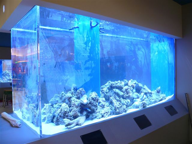 Custom aquarium fish tanks pinterest aquariums fish for Large aquarium fish