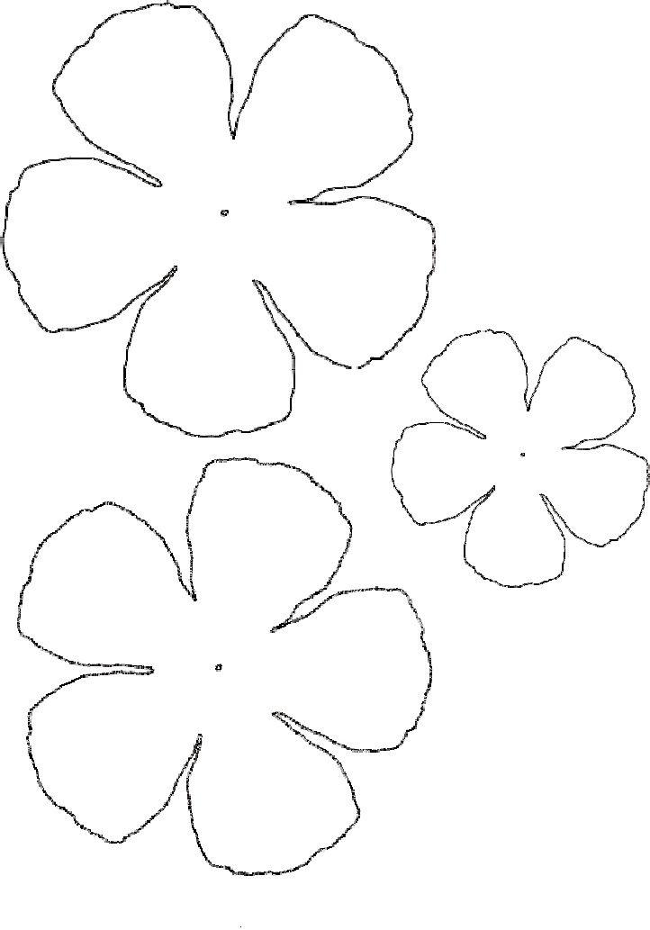 Ranunculus Flower Paper Flowers Craft Flower Template Flower Stencil