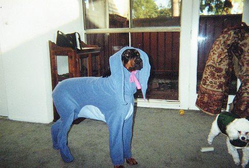 25 Creative Dog Costumes Eeyore Dog Costume