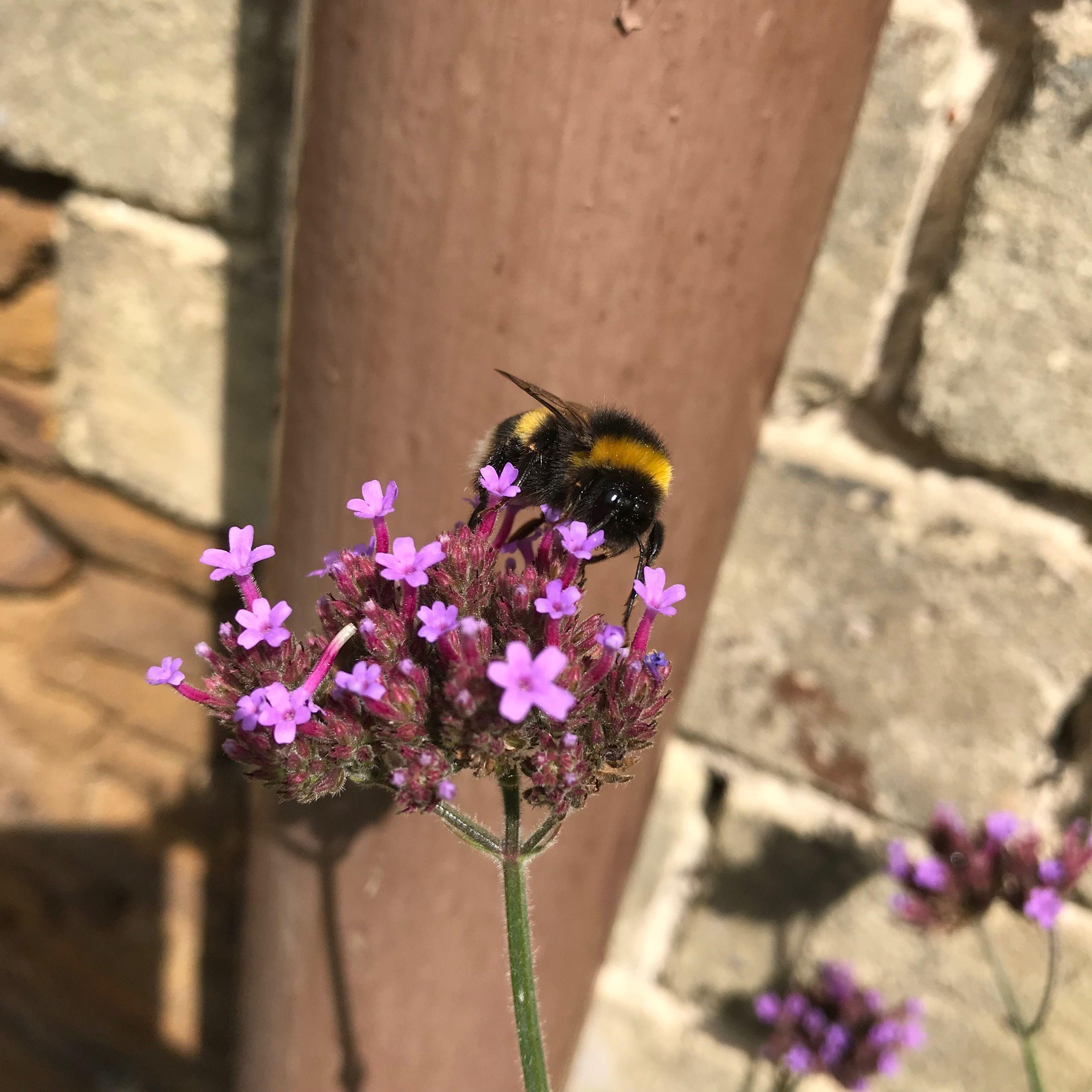 Pin by Sally Grice on Wonderful Garden | Pinterest | Gardens