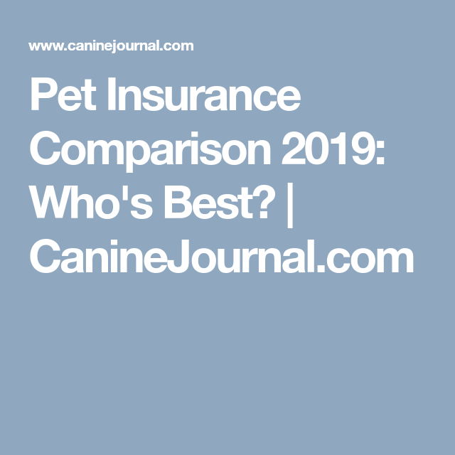 What S The Best Pet Insurance Company For 2020 With Images