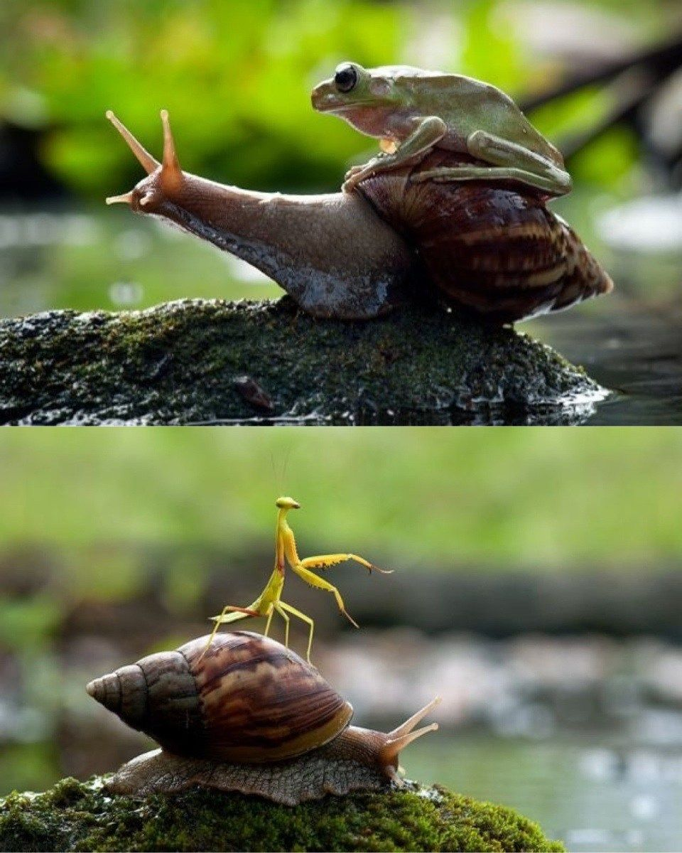 Snails: Nature's noble steed  http://lolsalot.com/snails-natures-noble-steed/  #Funny #Pic