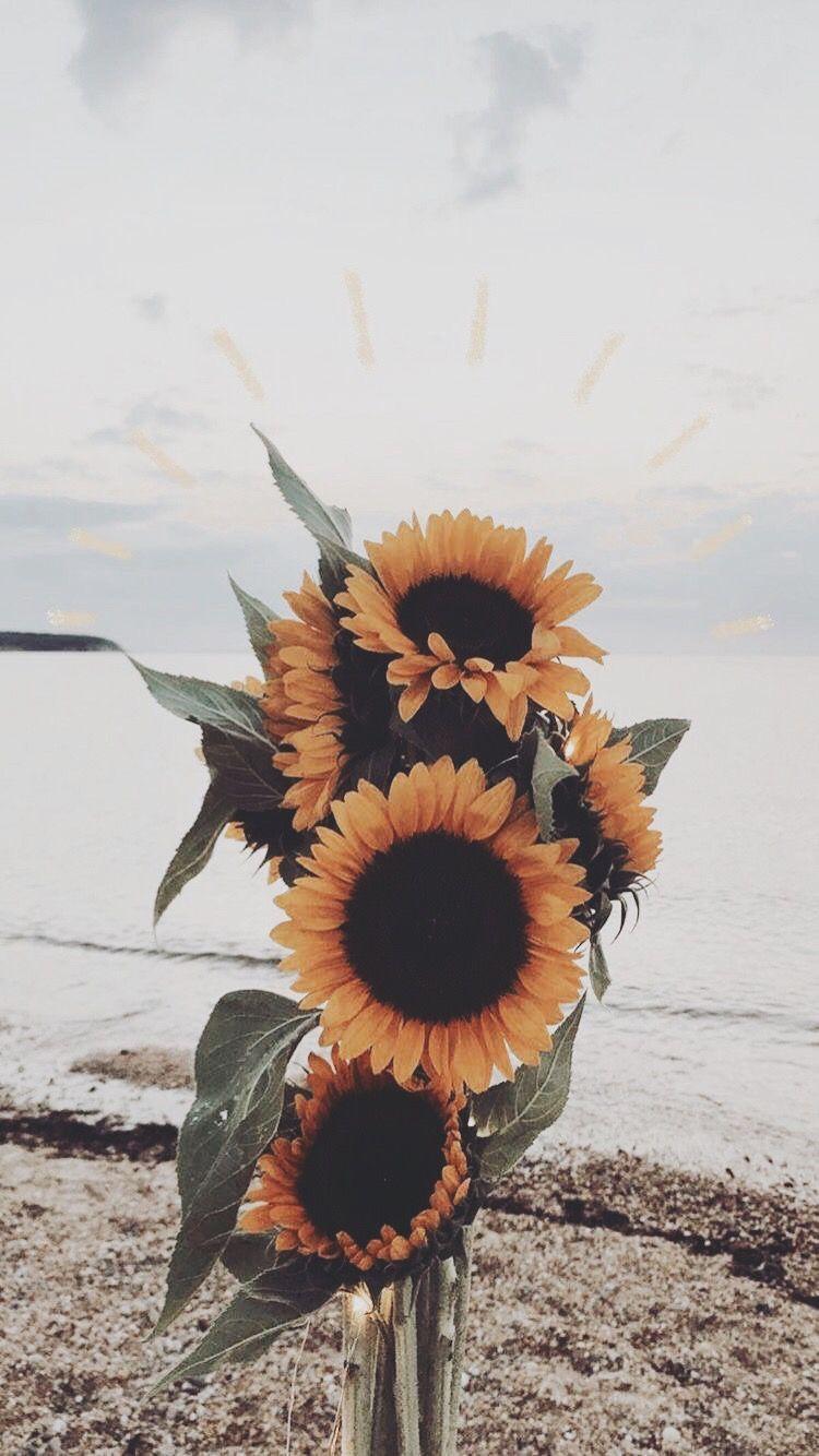 Sunflowers 🌻 🌻🌻 Sunflower wallpaper, Flower aesthetic