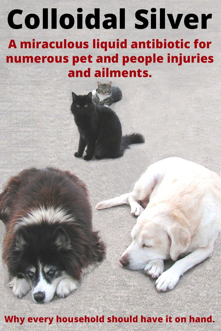 Pin On Important Pet Care Info