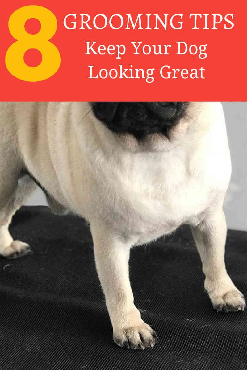 Cutting Your Dog S Hair Isn T Everything Dog Grooming Dogs Dog