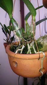 Plantas orquideas para aprender de forma dinâmica e divertida. textos sobre locais para ver orquideas espécies e híbridos do mundo todo!
