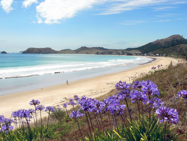 Opito Bay, Coromandel Peninsula, North Island, New Zealand | Scenery,  Places to see, New zealand