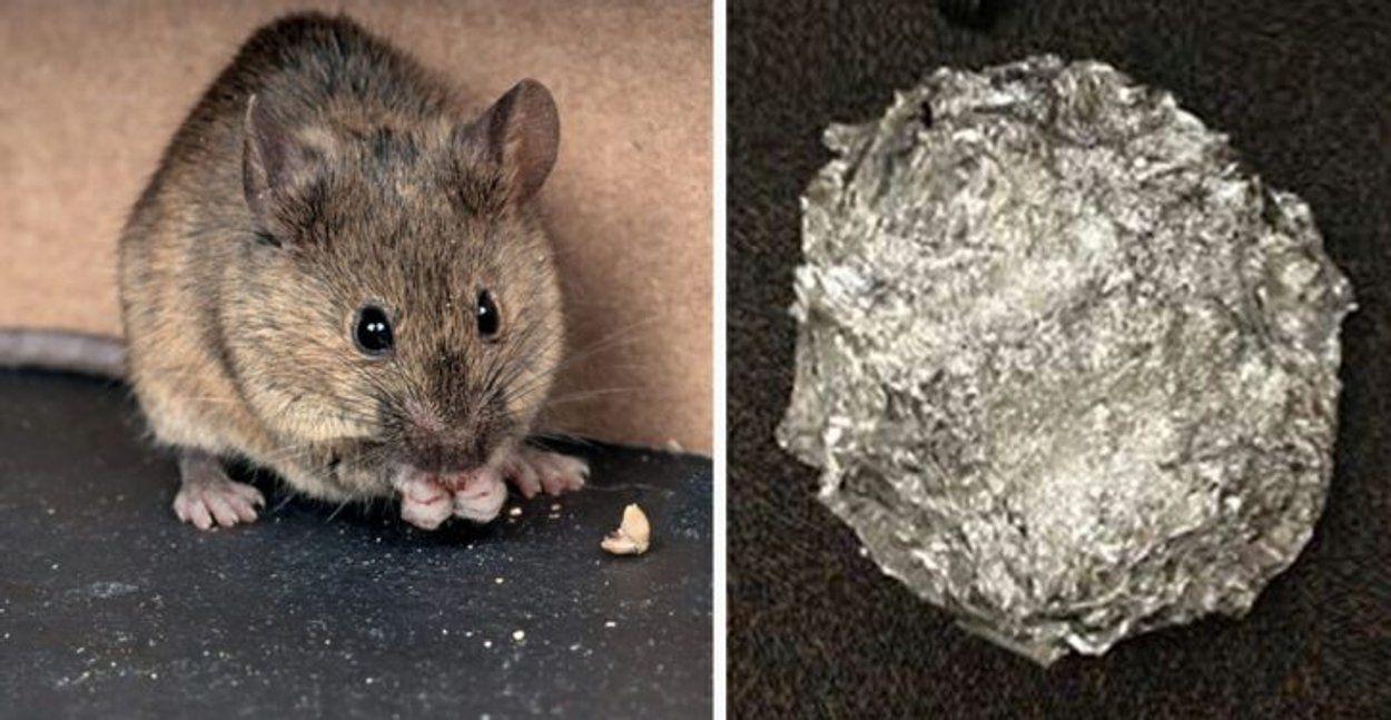 La bonne astuce au bicarbonate de soude pour empêcher les souris et les rats dentrer dans votre maison