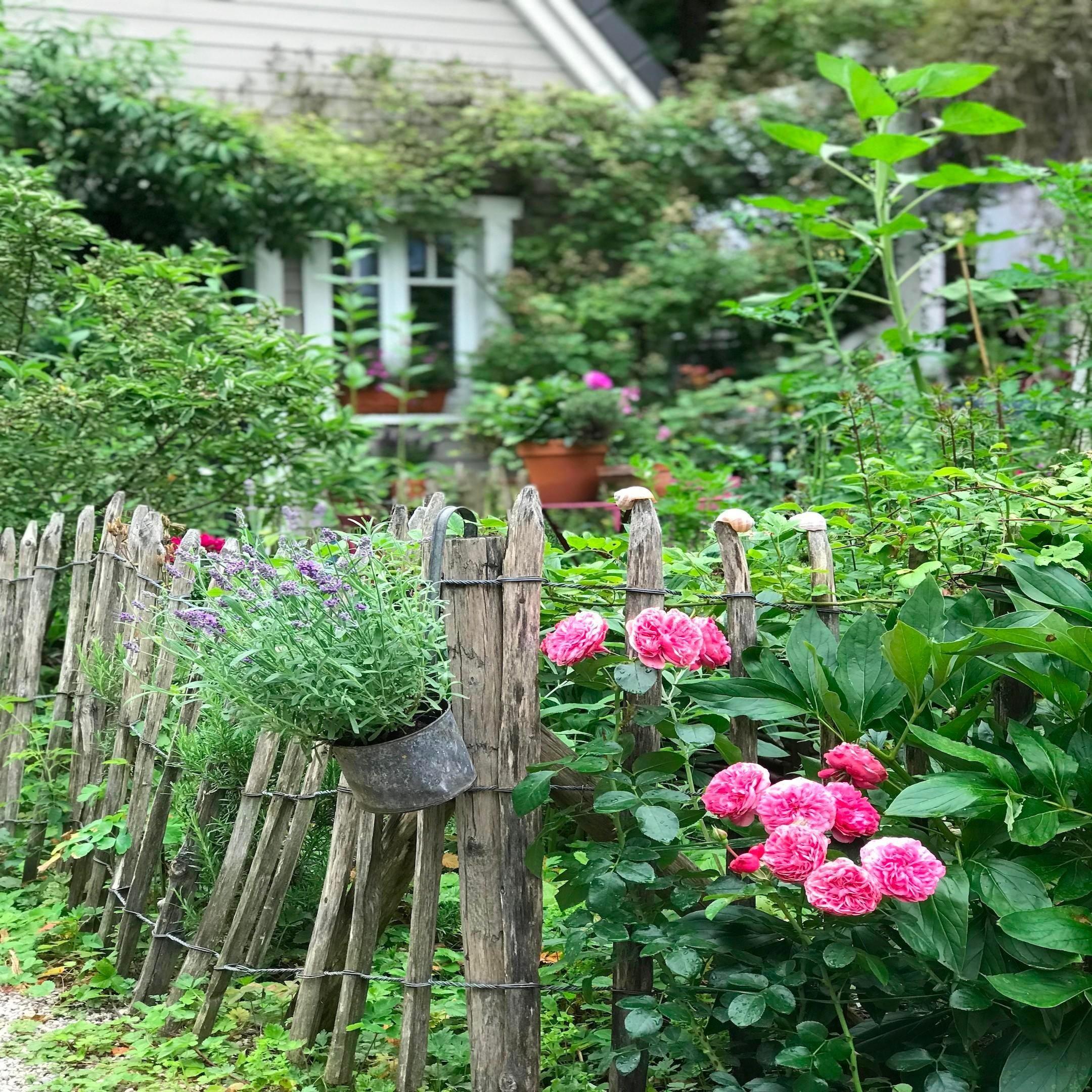 Der Onlinekurs Zum Cottage Garten Cottage Garten Garten Traumgarten