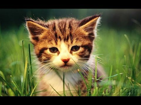 Top 10 Cute Kittens Videos Youtube Compilation Cat Kitten Video Funny Kittens Cutest Cute Kitten Gif Cats And Kittens