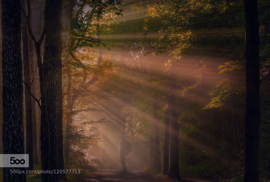 The beauty of the morning - Pinned by Mak Khalaf Landscapes fogfoliageforestlandscapelightsnaturenikonsunsunrisetree by MaurizioRewinds