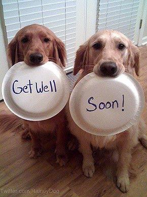 Afbeeldingsresultaat voor Get well soon dog