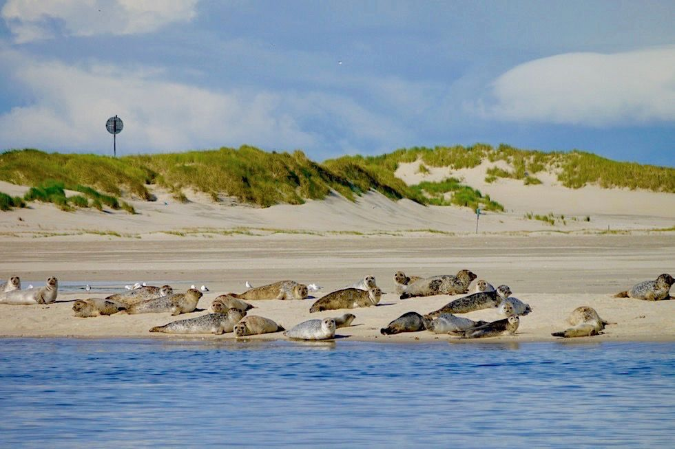 Spiekeroog - Seehundbänke an der Ostplate - Ostfriesische Inseln ...