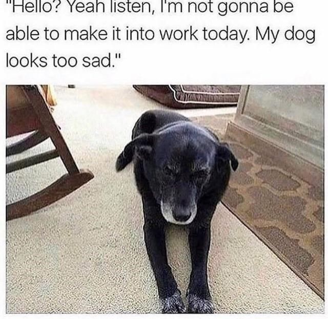 Rise And Shine With Fresh Animal Memes (August 8, 2021) - I Can Has Cheezburger?