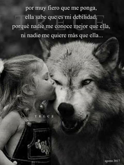 Por eso te amo   Fotos lobos Amor de lobo Imagenes de lobos