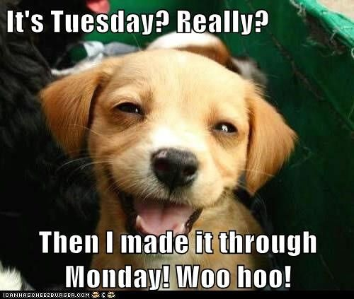 Tuesday pictures it s tuesday really then i made it through monday