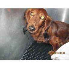 Kuppa San Antonio Animal Care Services San Antonio Texas