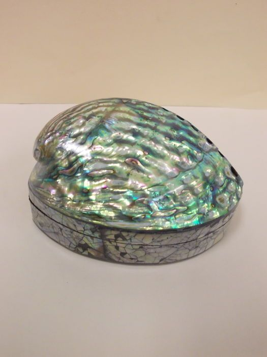 Abalone Shell Jewellery Box New Zealand Shell jewelry Abalone