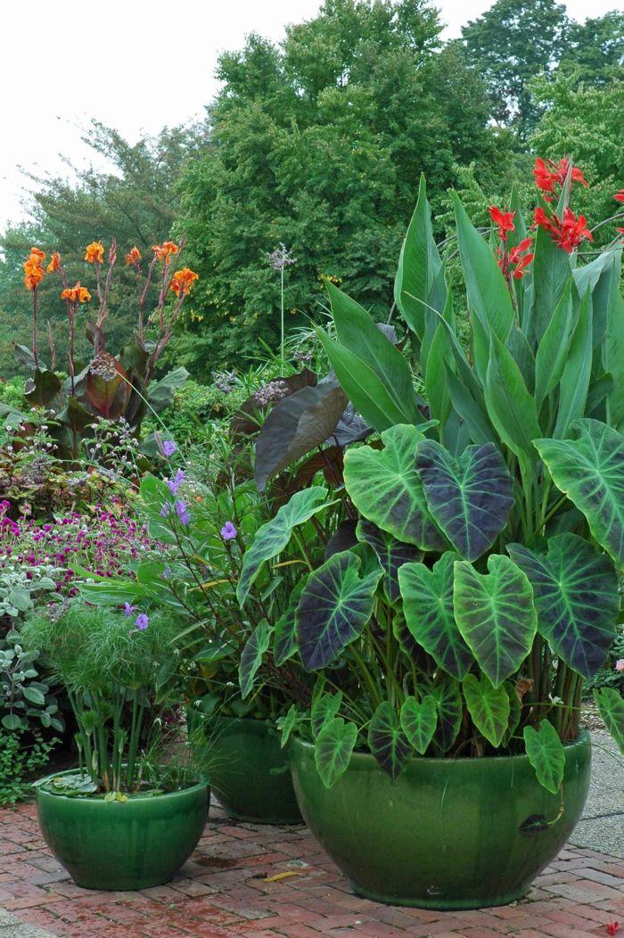 Pflegeleichte Gärten profitieren aus dem Zauber wunderschöner Containerpflanzen #elephantearsandtropicals