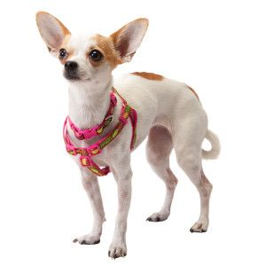 Top Paw Cutie Pie Step In Dog Harness Harnesses Petsmart Dog Harness Dogs Petsmart