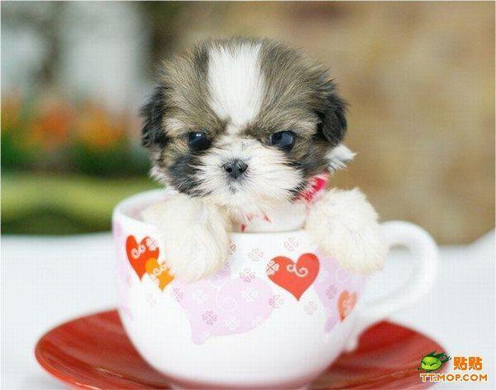 Pin Em Puppy Love