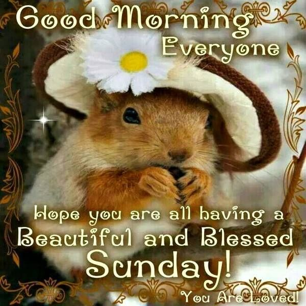 Good morning have a blessed sunday quotes sayings good morning have a blessed sunday m4hsunfo