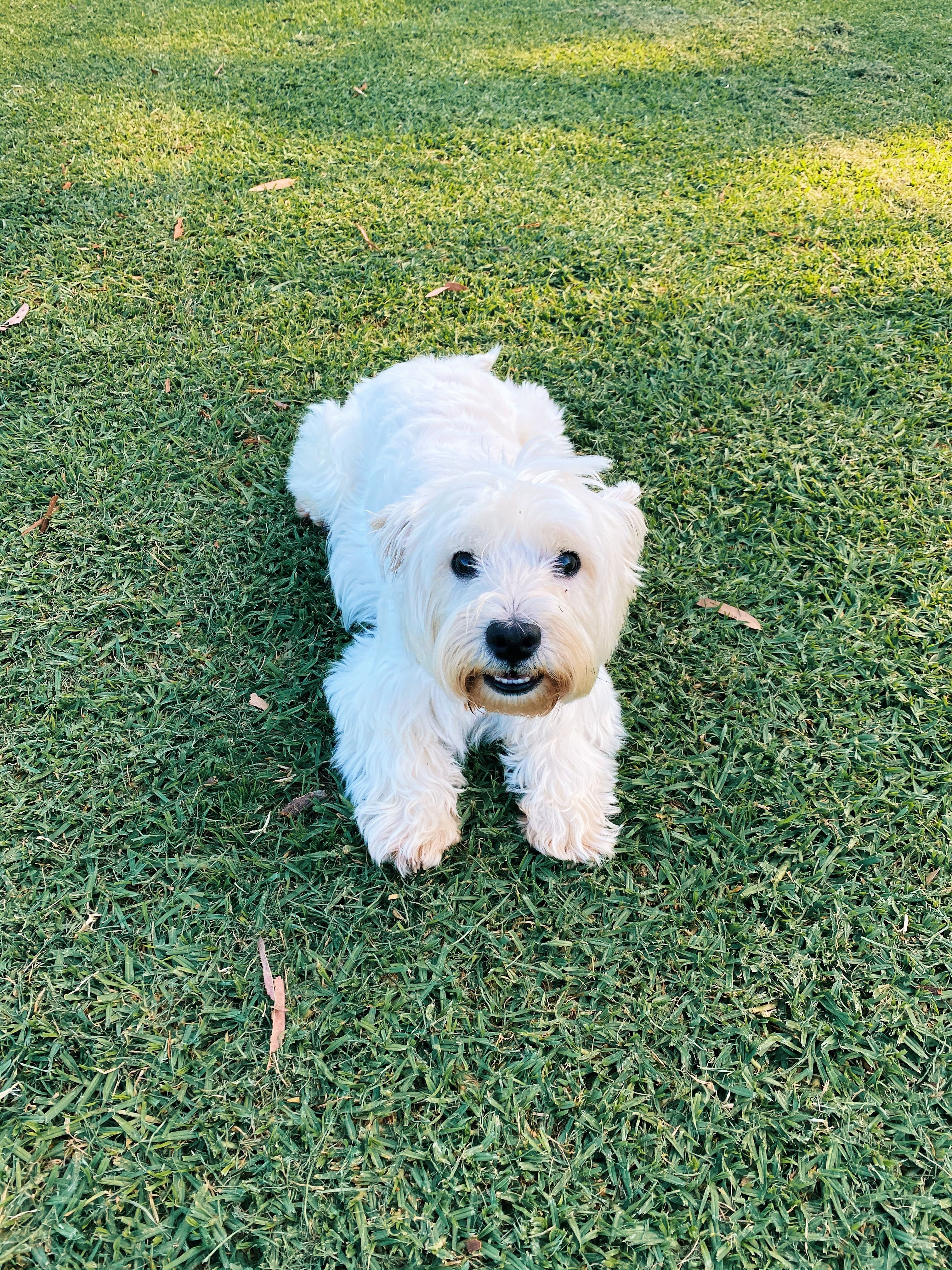 Pinterest lolaahicks   Cute animals, Cute dogs, Animals