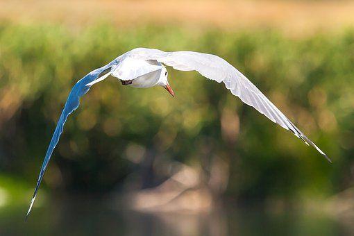 Avian, Cape Town, False Bay Nature Reserve