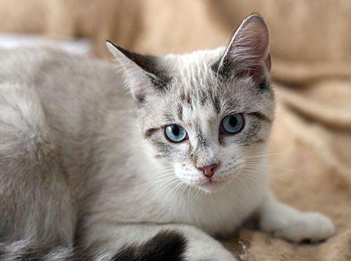 Crash S Landing Cat Rescue Placement Center Cat Rescue Cats Animals