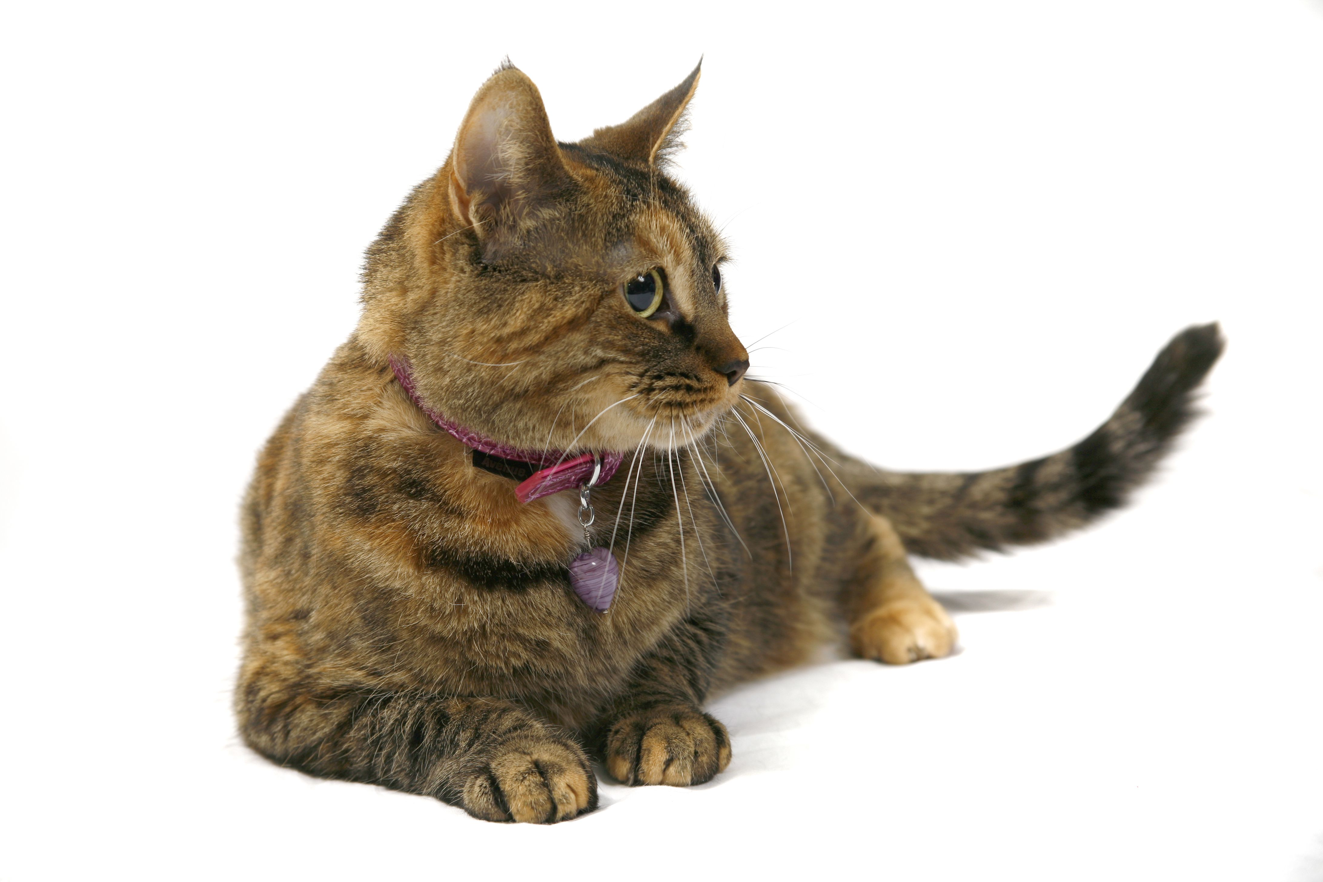 Livie clinic cat and professional greeter with images