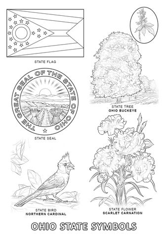 Ohio State Symbols Coloring Page State Symbols Printable