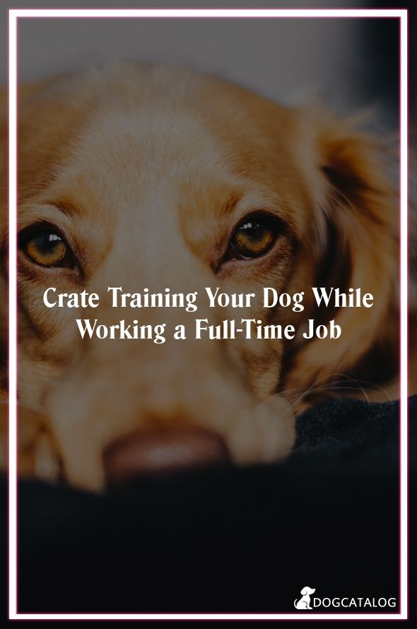 Crate Training Your Dog While Working A Full Time Job By Itimepets