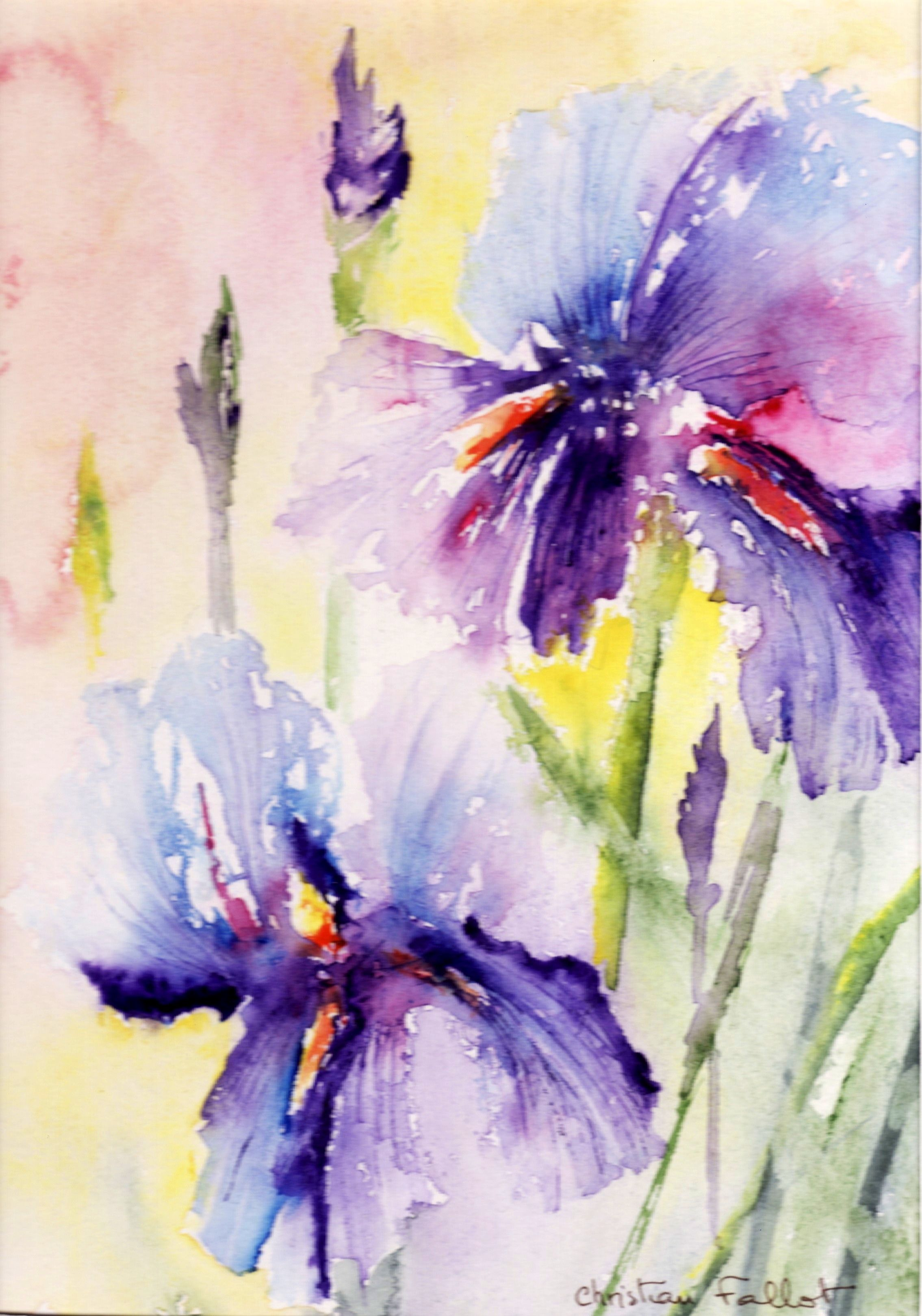 Christian Fallot Aquarelle Iris 1 Flower Painting Watercolor