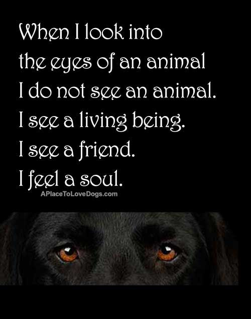 Pin By Dee Borrelli On Dog Quotes Dog Quotes Animal Quotes Soul Quotes