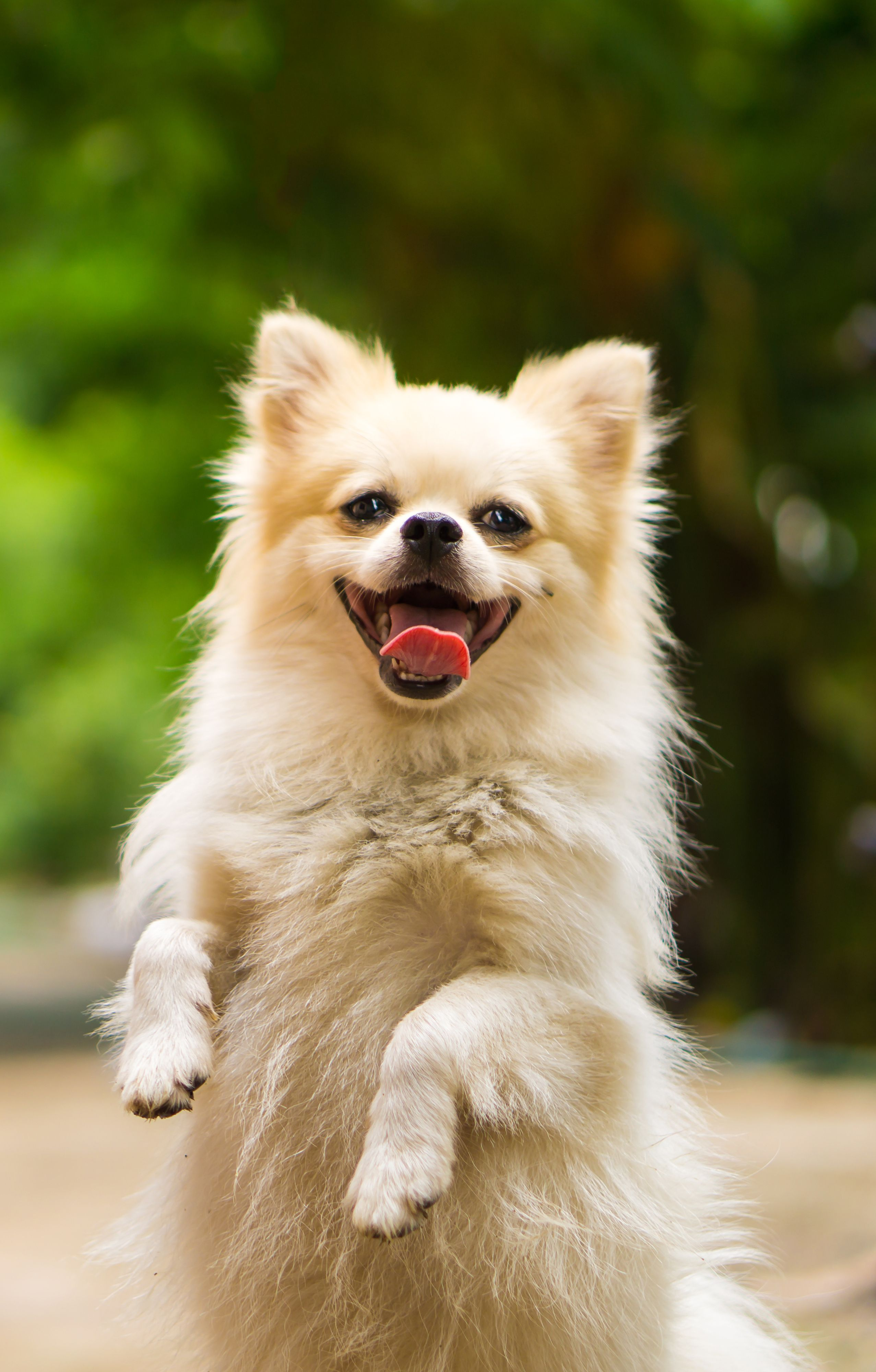 Happy Dog Cute Small Dogs Happy Dogs Dogs
