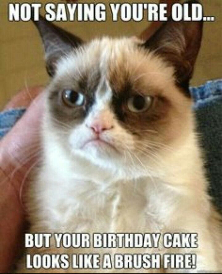Pin By Jim On Happy Birthday Grumpy Cat Quotes Funny Grumpy Cat Memes Grumpy Cat Humor