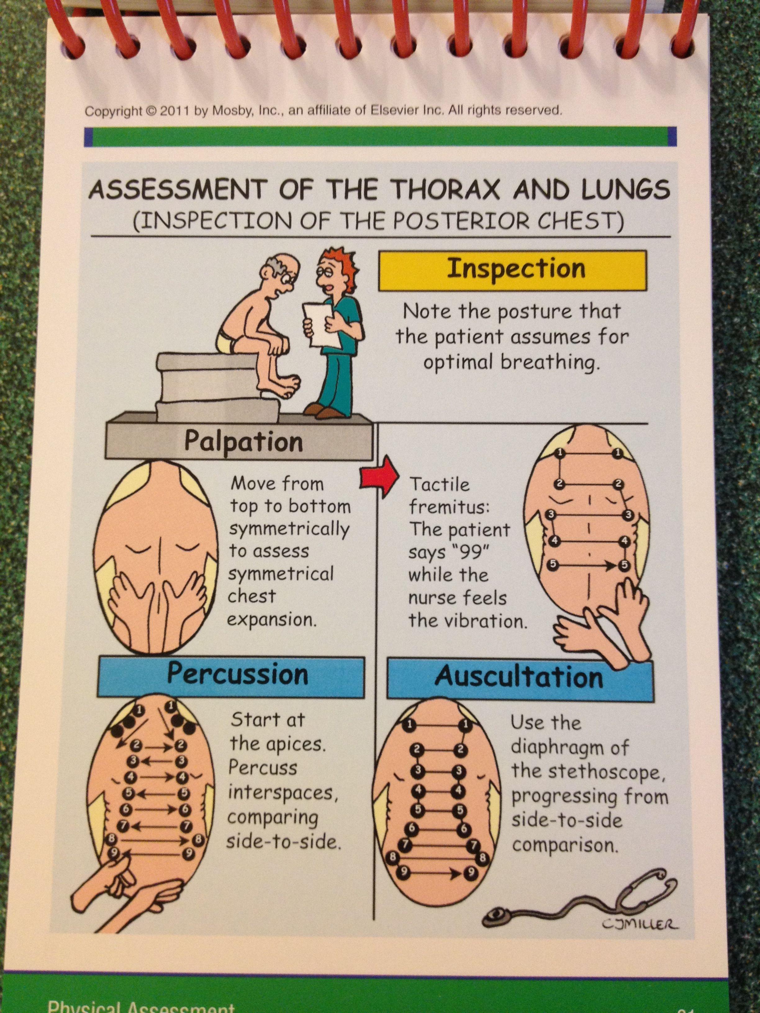 Lung assessment | Nurse Nursing assessment Health ...