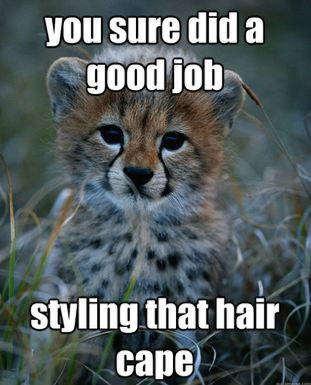 cutest baby cheetah jokes | Funny Baby Animals Memes Baby ...