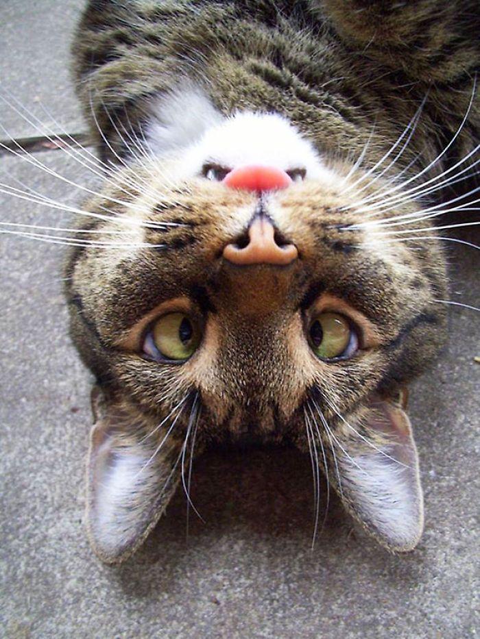 Upside Down Cats Face Looks Like Angry Bunny Bored Panda