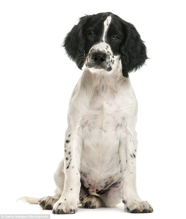 The Must Have Mixed Up Mutts Giving Rise To The Designer Dogs Fad Designer Dogs Dog Crossbreeds Dogs