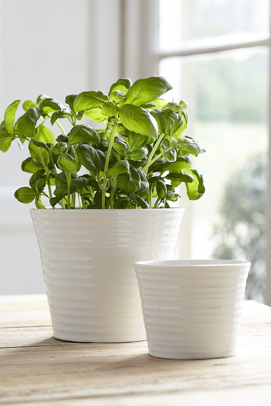 Herb pots for kitchen - White Ceramic Herb Pots