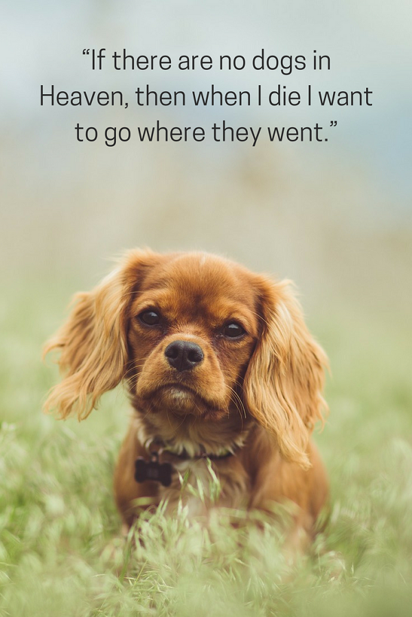 e2c56729bdb418d2a9506d04b7e3382b 100 of the best dog inspired quotes dog, pet quotes and charles