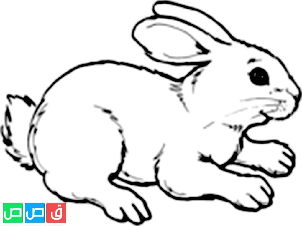 رسم ارنب للتلوين Fictional Characters Character Art