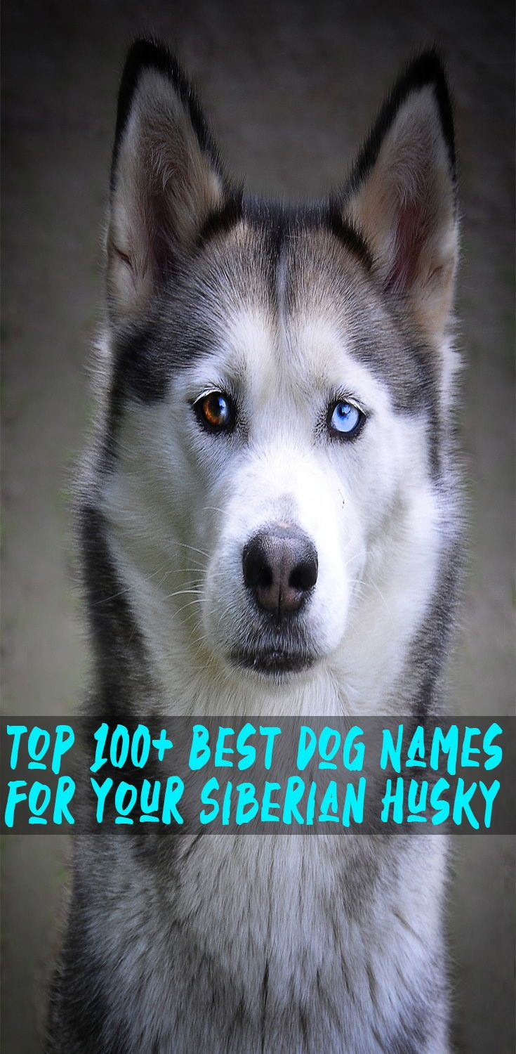 Best Dog Names For Your Siberian Husky Husky Names Best Dog Names Dog Names