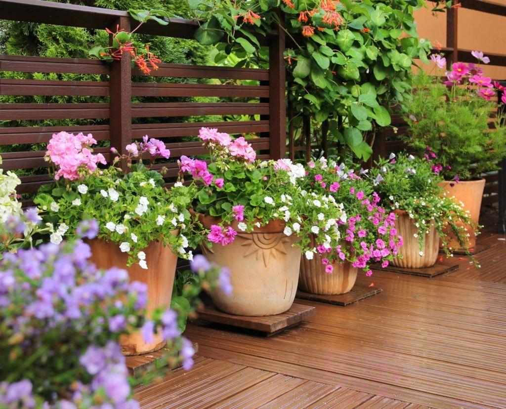 Kubelpflanzen Unsere Top 15 Fur Balkon Garten Plantura In 2020 Kubelpflanzen Pflanzen Bodendecker