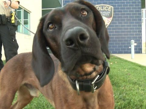 Police K-9 finds missing teen with special needs during first day on the...