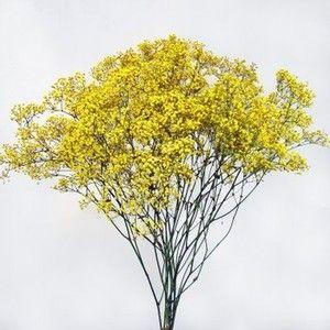 Yellow Baby S Breath Babys Breath Freesia Flowers Flowers