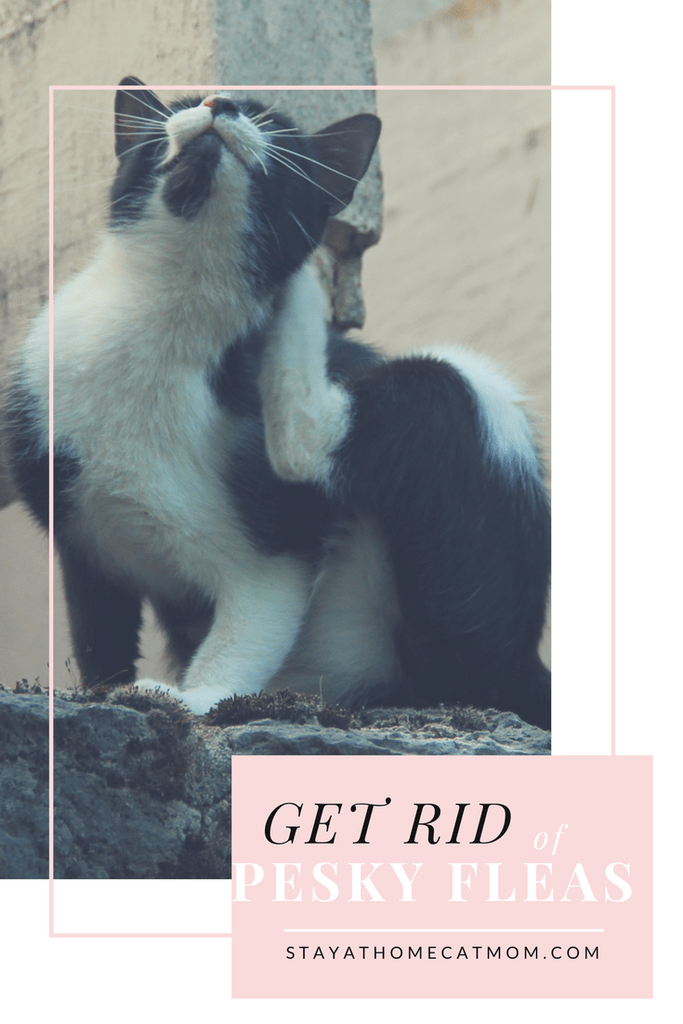 Get Rid Of Pesky Fleas For Good Stay At Home Cat Mom Cat Mom Cat Fleas Fleas On Kittens